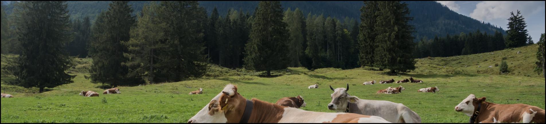 software ganadero bovino cebadero nevado